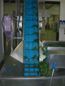 VOLL-PU-Hygieneband gelocht als Steigband